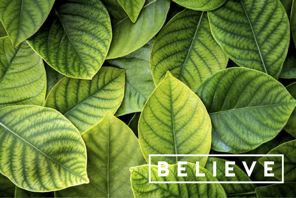 believe LAB by AG
