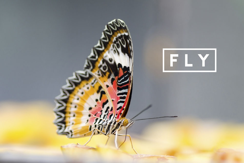 fly LAB by AG